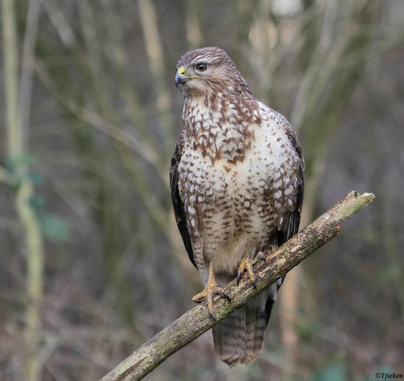 Buse variable - Priels Werner